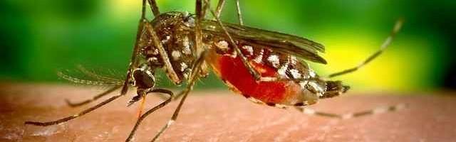 Dengue – Causas, Tipos, Sintomas e Tratamentos