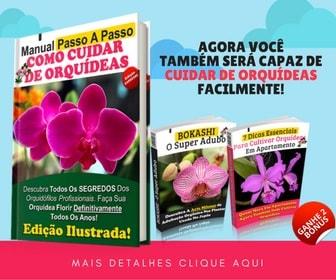 Como Cuidar de Orquídeas